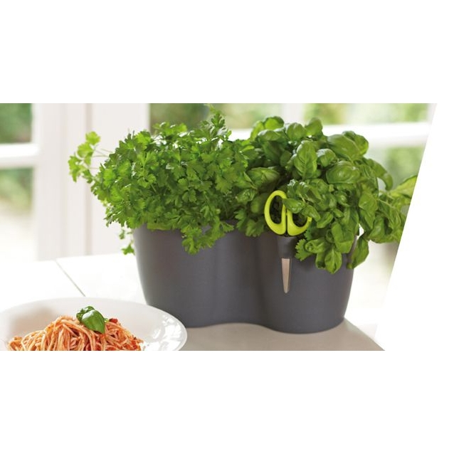 Brussels Herbs Duo Small