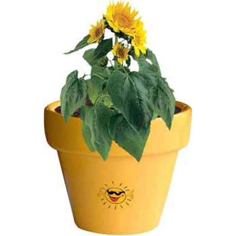 111954579753 - Pot Couleur Soleil, graines de mini tournesol, inc